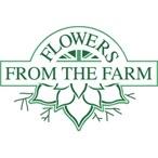 Sturminster Newton-Eveline's Home Grown Flowers